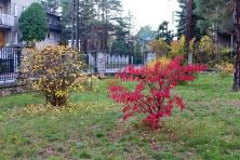 Otoczenie Świątyni - Jesień